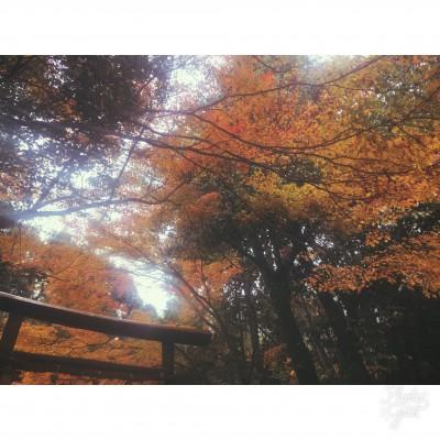 🍁京都旅🍁