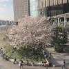 🌸Enjoy Spring 🌸
